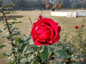 IMG_20150112_160346_HDR